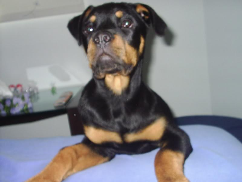 Nuestras mascotas PIC_0023