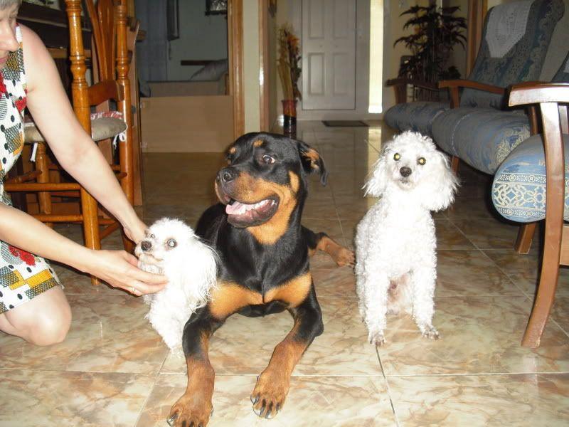 Nuestras mascotas - Página 4 Rona24-07-081