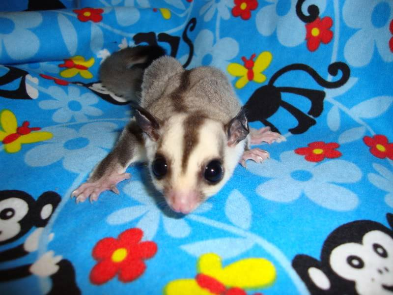 Adorable Joeys available at LuckyYou Gliders!!! DSC00599