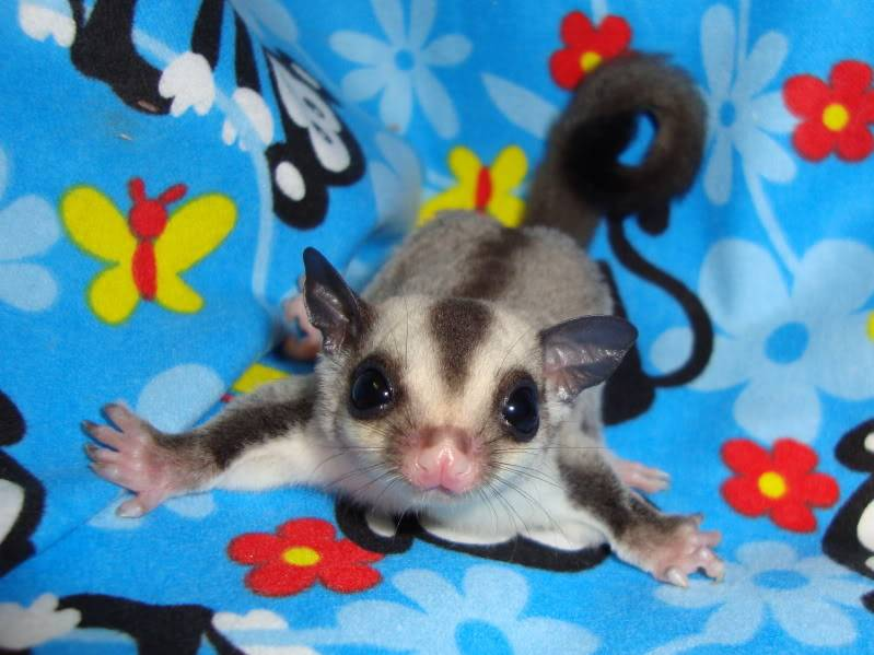 Adorable Joeys available at LuckyYou Gliders!!! DSC00563