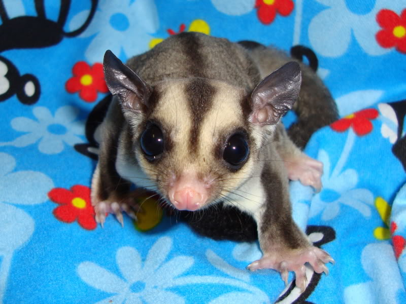 Adorable Joeys available at LuckyYou Gliders!!! DSC00606