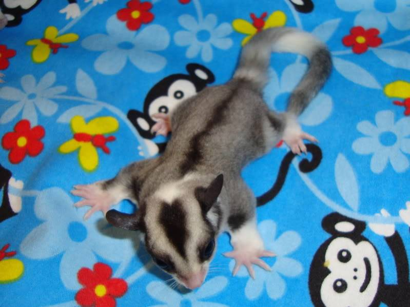 Adorable Joeys available at LuckyYou Gliders!!! DSC00585