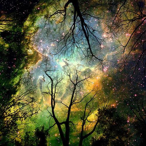 Profile - StarSeeker Cosmos