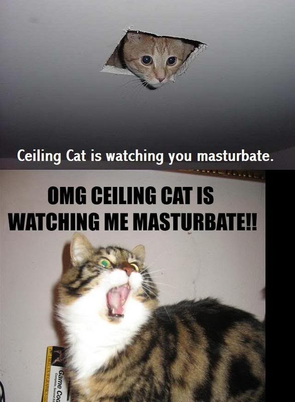 ceiling cat Pictures, Images and Photos
