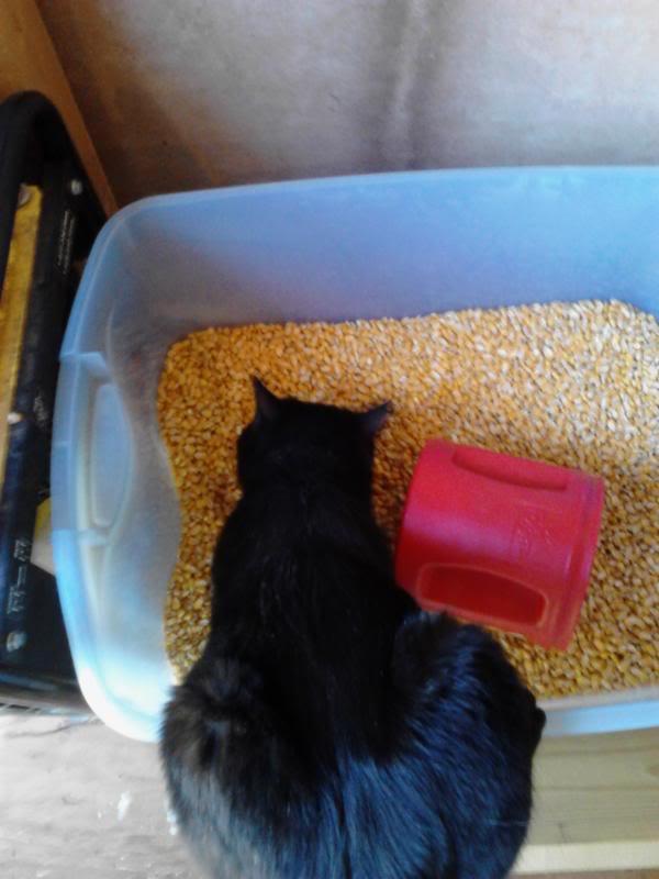 Weird Feline! IMG_20130406_160020_zps162d5d87