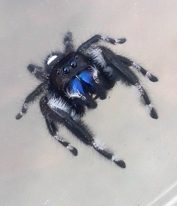 Your Tarantula and Spider pix.... - Page 3 IMG_20130320_145245