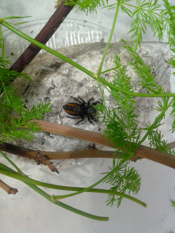 Your Tarantula and Spider pix.... - Page 3 IMG_20130331_123646-1