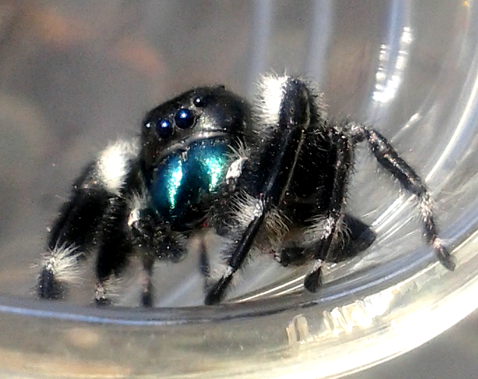 Your Tarantula and Spider pix.... - Page 3 IMG_20130402_173052