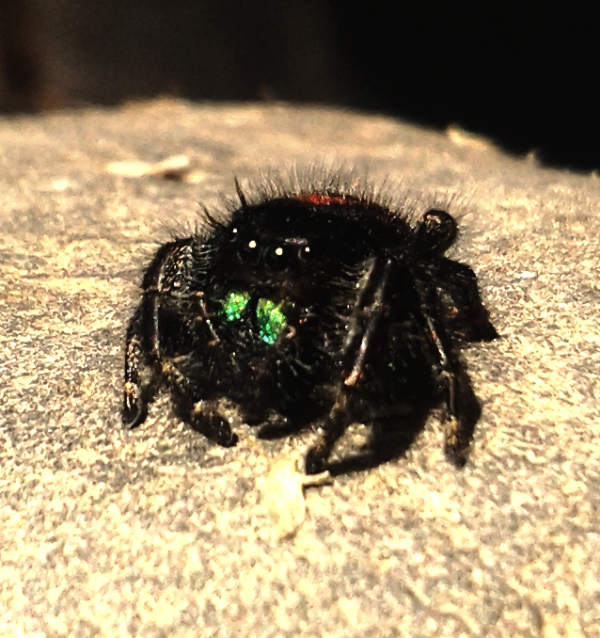 Your Tarantula and Spider pix.... - Page 3 IMG_20130428_145411