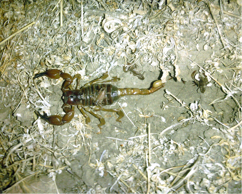 [Discussion] Capturing Scorpion's Behaviour - Page 3 IMG_20131007_202119
