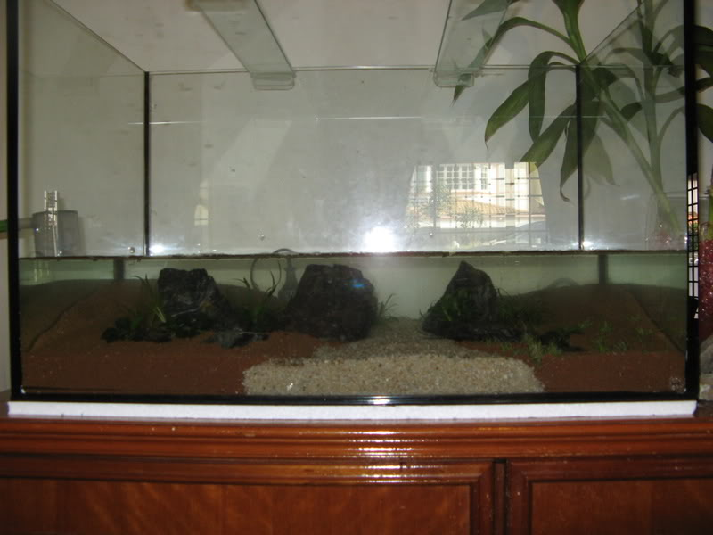 My 2ft Planted Tank IMG_3554