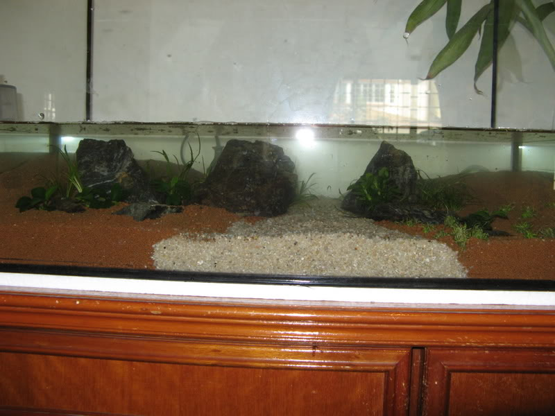 My 2ft Planted Tank IMG_3555