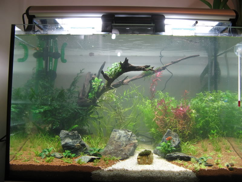 My 2ft Planted Tank IMG_3559