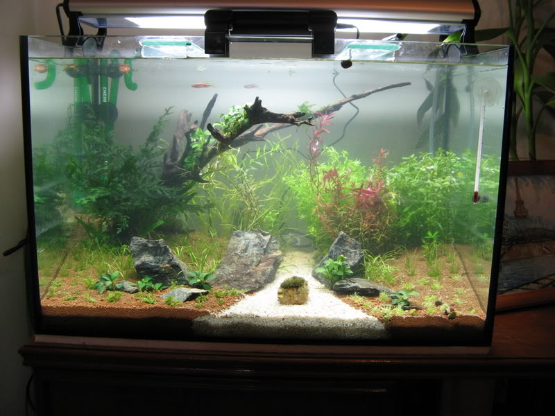 My 2ft Planted Tank IMG_3562