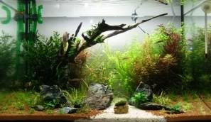 My 2ft Planted Tank 10thday1