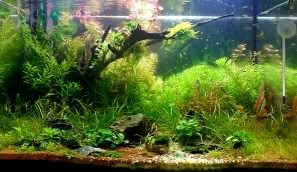 My 2ft Planted Tank 18022008a1