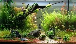 My 2ft Planted Tank 2mthsold1
