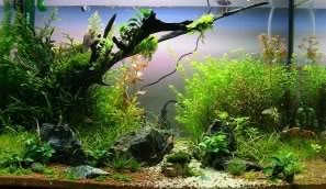 My 2ft Planted Tank Stone021