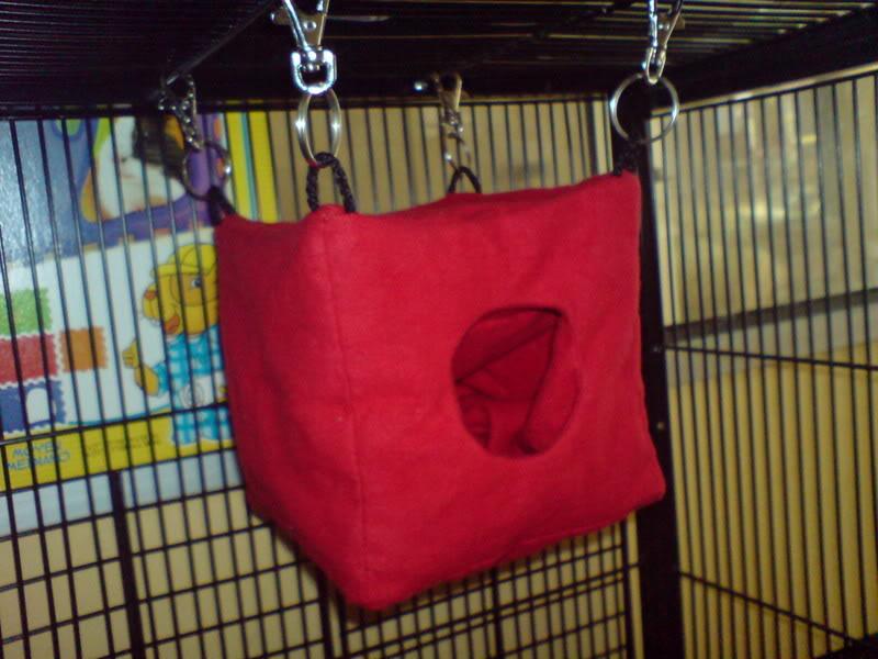 Taro 家的蜜袋鼯 DSC01046
