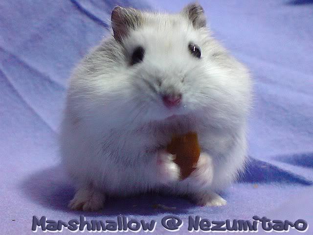 Marshmallow in the house!! Marshmallow3