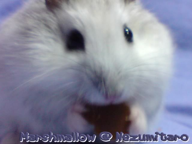 Marshmallow in the house!! Marshmallow4