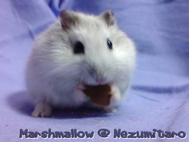 Marshmallow in the house!! Marshmallow5