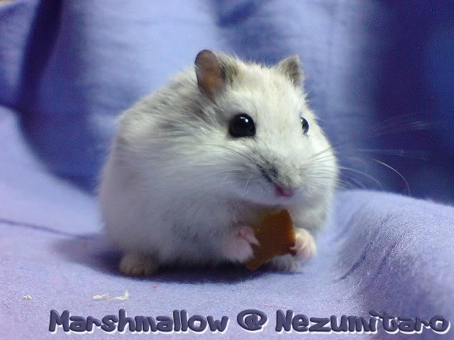 Marshmallow in the house!! Marshmallow6