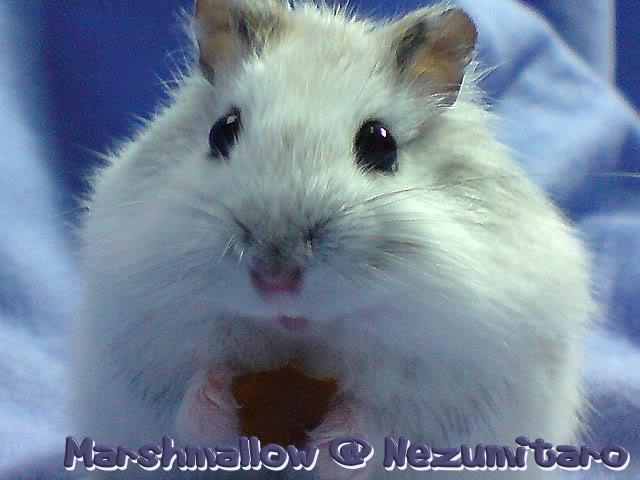 Marshmallow in the house!! Marshmallow7