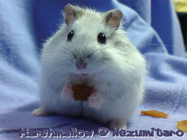 Marshmallow in the house!! Marshmallow8
