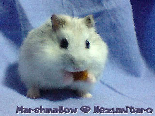 Marshmallow in the house!! Marshmallow9