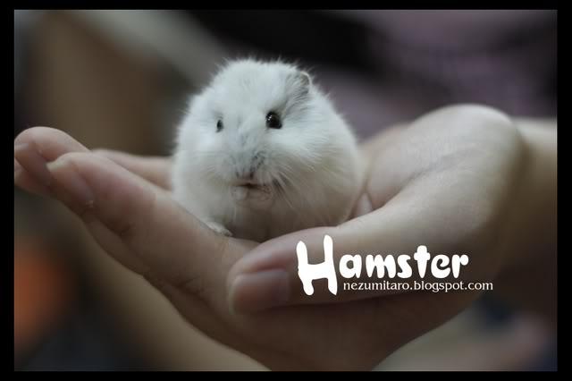 Cute Hammies in Pet Shack Hamster2