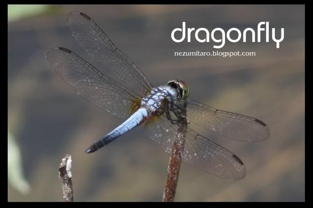 蜻蜓飞蜻蜓飞!! NetSA16