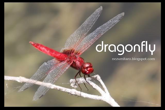 蜻蜓飞蜻蜓飞!! NetSA18