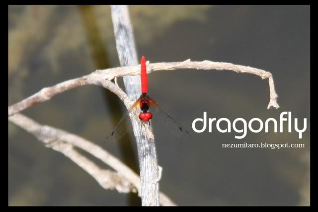 蜻蜓飞蜻蜓飞!! NetSA19