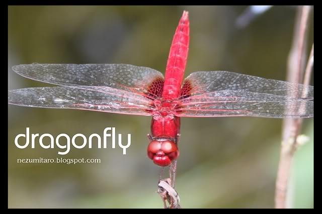蜻蜓飞蜻蜓飞!! NetSA22