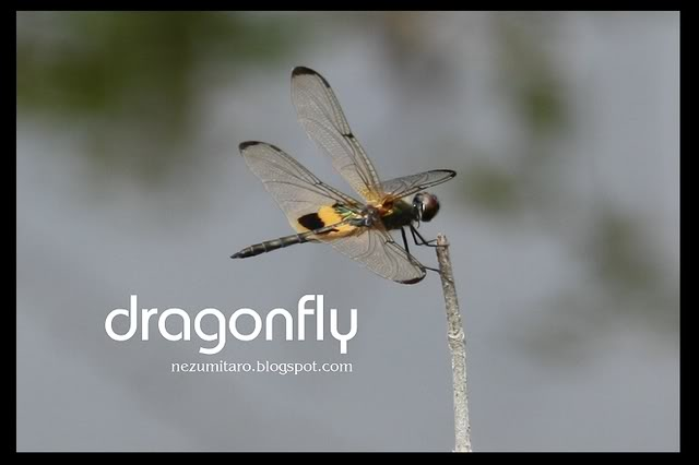 蜻蜓飞蜻蜓飞!! NetSA23