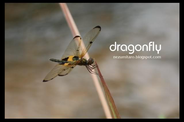 蜻蜓飞蜻蜓飞!! NetSA4