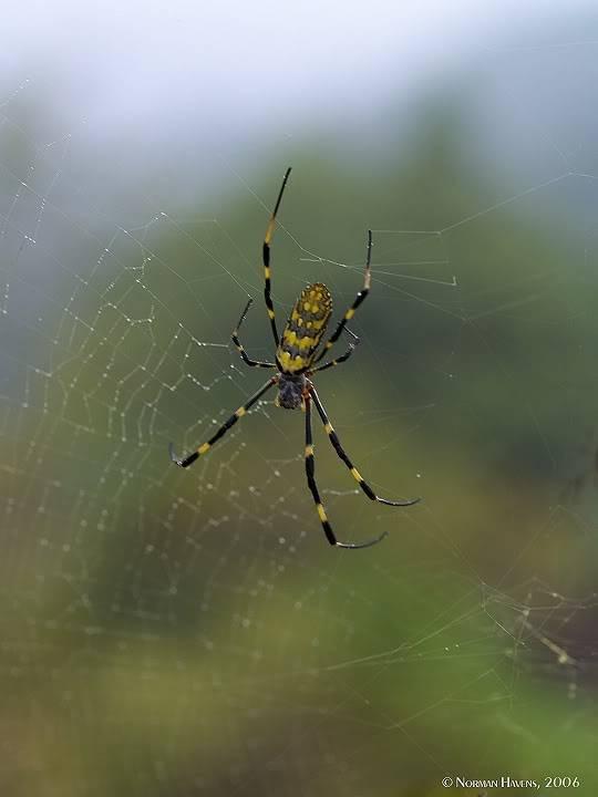 Arachnid Yuki _9170854w1