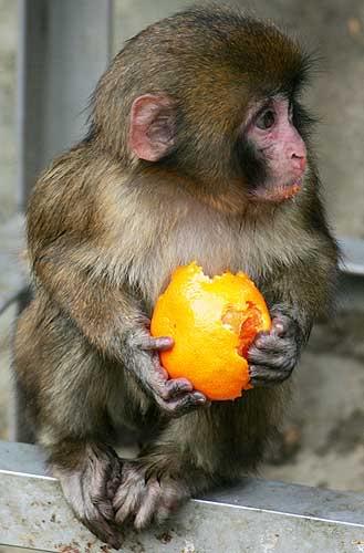 صور حيوانات منوعة Macaquetokyo