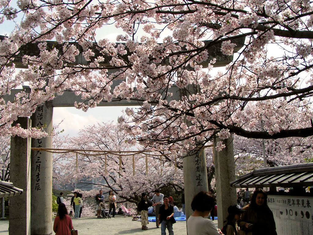 [Đời sống - Văn hóa] Các lễ hội tại Nhật Hanami09