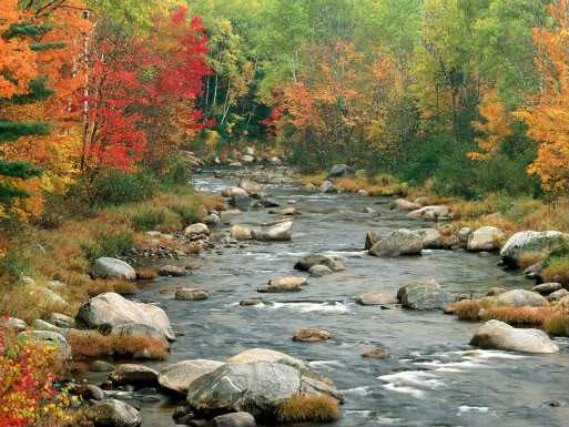 Trees (2) Autumn_Colors_White_Mountains_New_H-1
