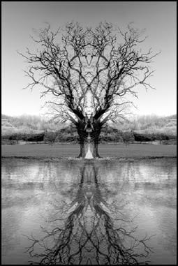 Trees GhostTree-1