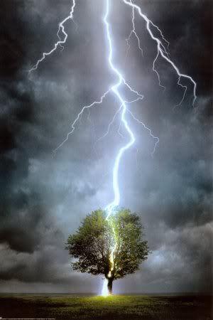 Trees - Page 2 Lightningtree