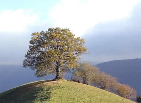 Trees Noms-de-dieu4a1