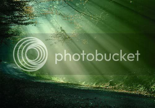 Der mystische Wald 1280x