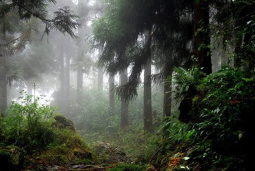 Der mystische Wald 2872166885_e745415c86
