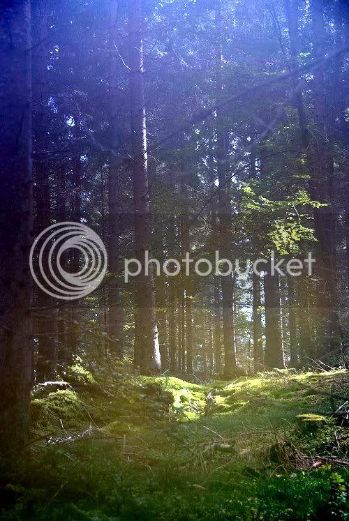 Der mystische Wald Mystischer-Wald-a18653969