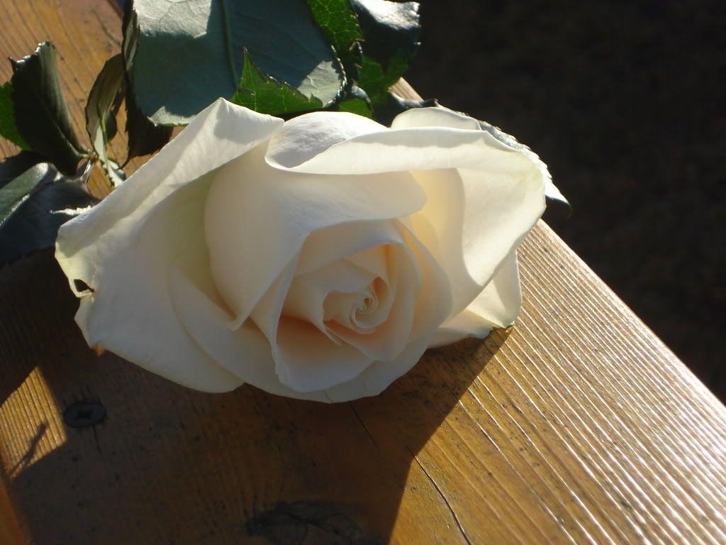 White Rose LuckyAndBrittaniPics065