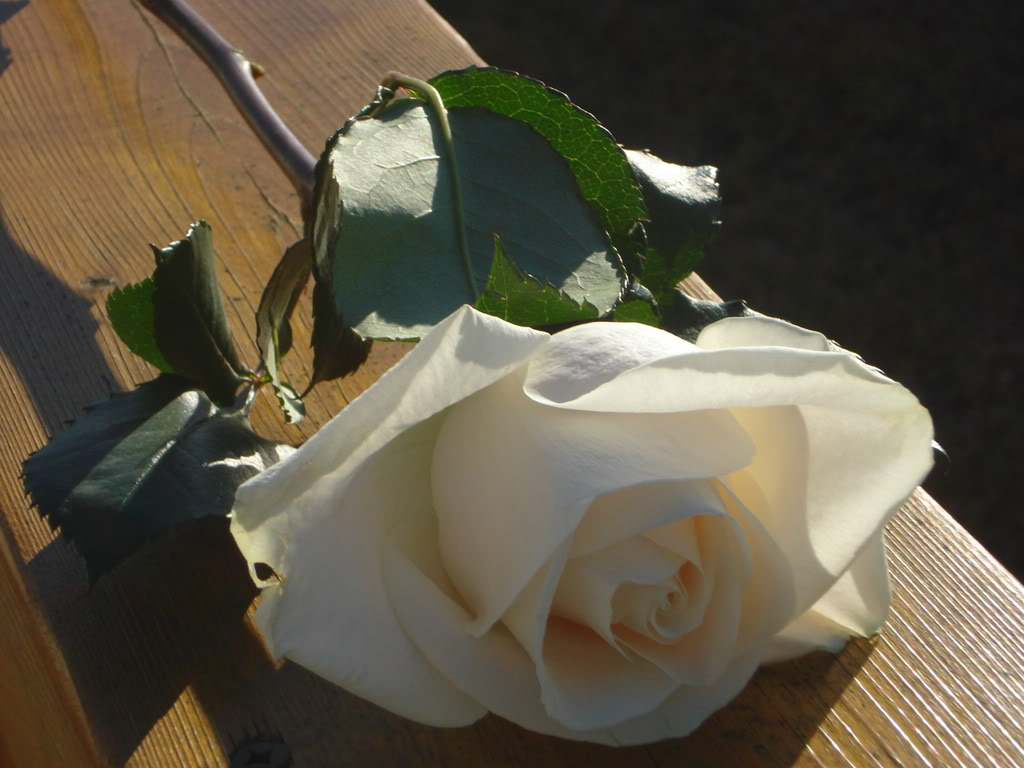 White Rose LuckyAndBrittaniPics066