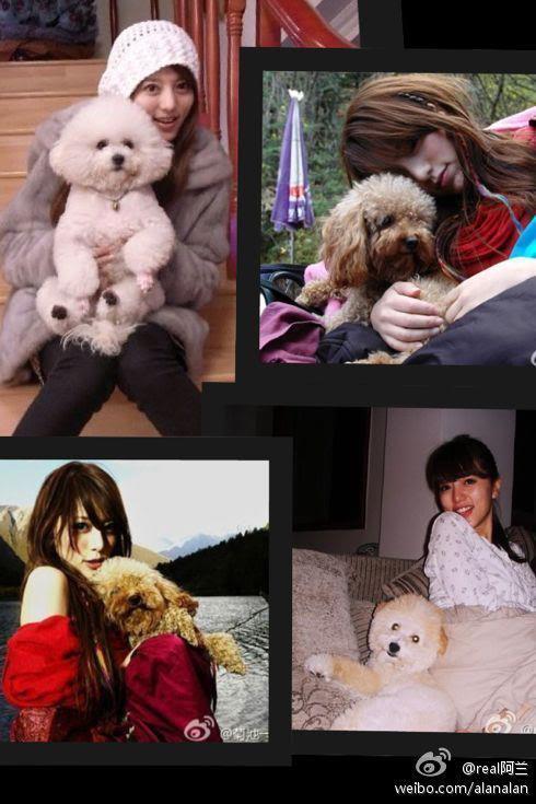 alan's dog, Bobi, passed away  311086_299467236732573_291989030813727_1335811_897294732_n